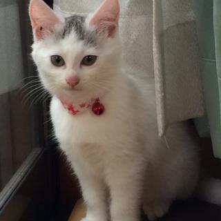 おめめクリクリ元気な白系子猫!!