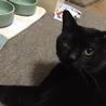 気は小さいが隠れ甘えん坊黒猫! サムネイル2
