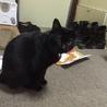 気は小さいが隠れ甘えん坊黒猫! サムネイル3