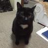 気は小さいが隠れ甘えん坊黒猫! サムネイル4