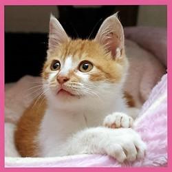 「つるみ・猫のカギしっぽ」猫の譲渡会