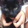 人懐こい子猫3ヶ月「クロ」