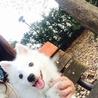真っ白ふわふわの仔犬日本スピッツ サムネイル5