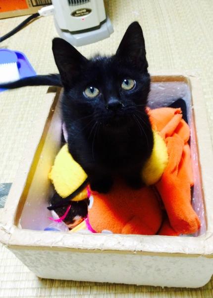 「【黒猫】 ルル (仮名)」三重県 - 猫の里親募集(95247)