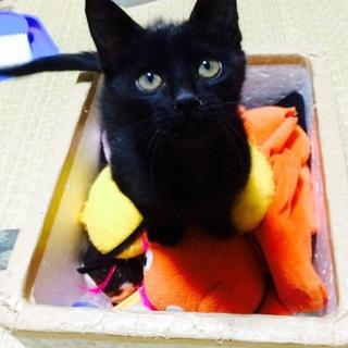 【黒猫】 ルル (仮名)