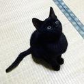 【黒猫】 ミソシル (仮名)