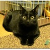 招福黒猫・ブラッキー 家族求む!