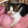 丹波市保護猫応援団(保護活動者)