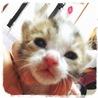 12/15生まれのキジトラ模様の子猫