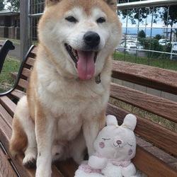 ♪犬猫譲渡会♪