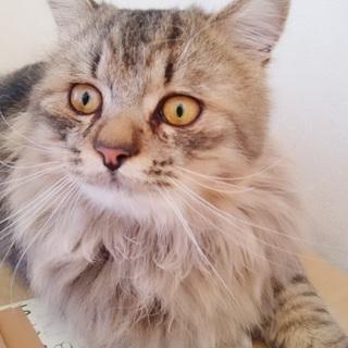 うるうるした目がとても印象的な猫ちゃん♪