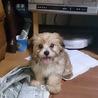 3か月の仔犬 ふわもこの可愛いコです