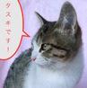 ♪子猫3ヶ月 なかよし兄弟のタスキ ♪