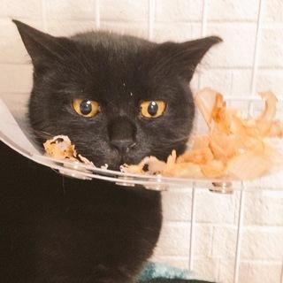 黒猫の女の子 クー