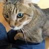 若々しい19歳のオレ様な猫 サムネイル5