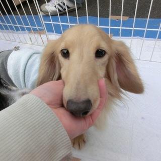 『犬太』人が好きで、甘えん坊