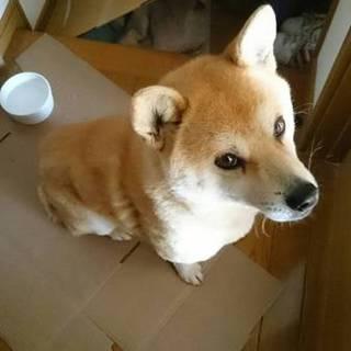 迷い犬の里親募集!