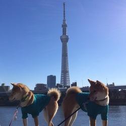 2015年年末の東京旅行