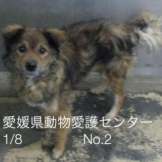 愛媛県動物愛護センターに収容されています‼️