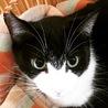 白黒鉢割れ・前髪長めのオカッパちゃん目が金色♀