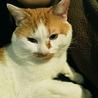 推定3歳♂ 捨て猫か迷い猫です サムネイル3
