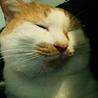推定3歳♂ 捨て猫か迷い猫です サムネイル7