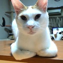 みんにゃの家 猫の譲渡会 At きまぐれ堂