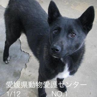 愛媛県動物愛護センターに収容されてます!!