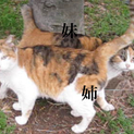 緊急!凍り風でギリギリ状態。ミケ&サビ姉妹ネコ