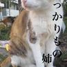 緊急!凍り風でギリギリ状態。ミケ&サビ姉妹ネコ サムネイル3