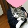 思わず笑顔になるほど可愛い子猫ポポ君