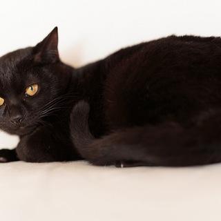 元気で懐こい黒ネコのくるみちゃん