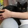 黒猫のくうちゃんです。お行儀のいい女の子です。