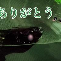 なおこ(♂)