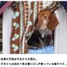 会津保健所 15-12-07 ビーグル メス
