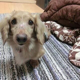 「直太郎」人は好きですが、犬とは相性次第です