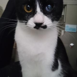 片目無くした甘えん坊白黒子猫!!