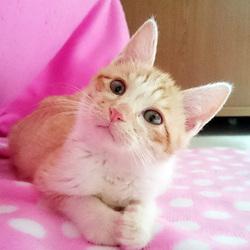 猫の譲渡会 Bootymarket × [sakuraneko]
