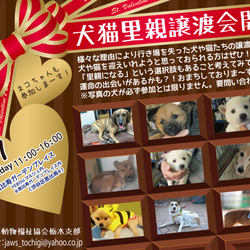 2月7日恵比寿譲渡会開催!