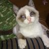 全盲だけど元気な子猫グレちゃんです♪