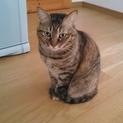 可愛いさ満点。癒し系猫かえでちゃん。