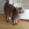 可愛いさ満点。癒し系猫かえでちゃん。 サムネイル2