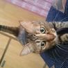 可愛いさ満点。癒し系猫かえでちゃん。 サムネイル3