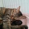 可愛いさ満点。癒し系猫かえでちゃん。 サムネイル4