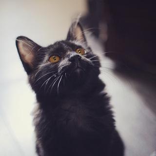 穏やかなフワフワ黒猫男子『ジャン』♪
