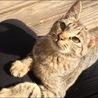 猫好き・元気な女の子