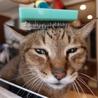 若々しい20歳のオレ様な猫 サムネイル7