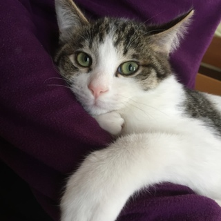 おっとり子猫のミントくん、5ヶ月です。