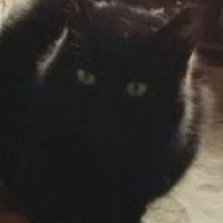 ふわり黒猫のくろちゃん