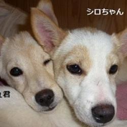 「犬の合宿所in高槻」の譲渡会